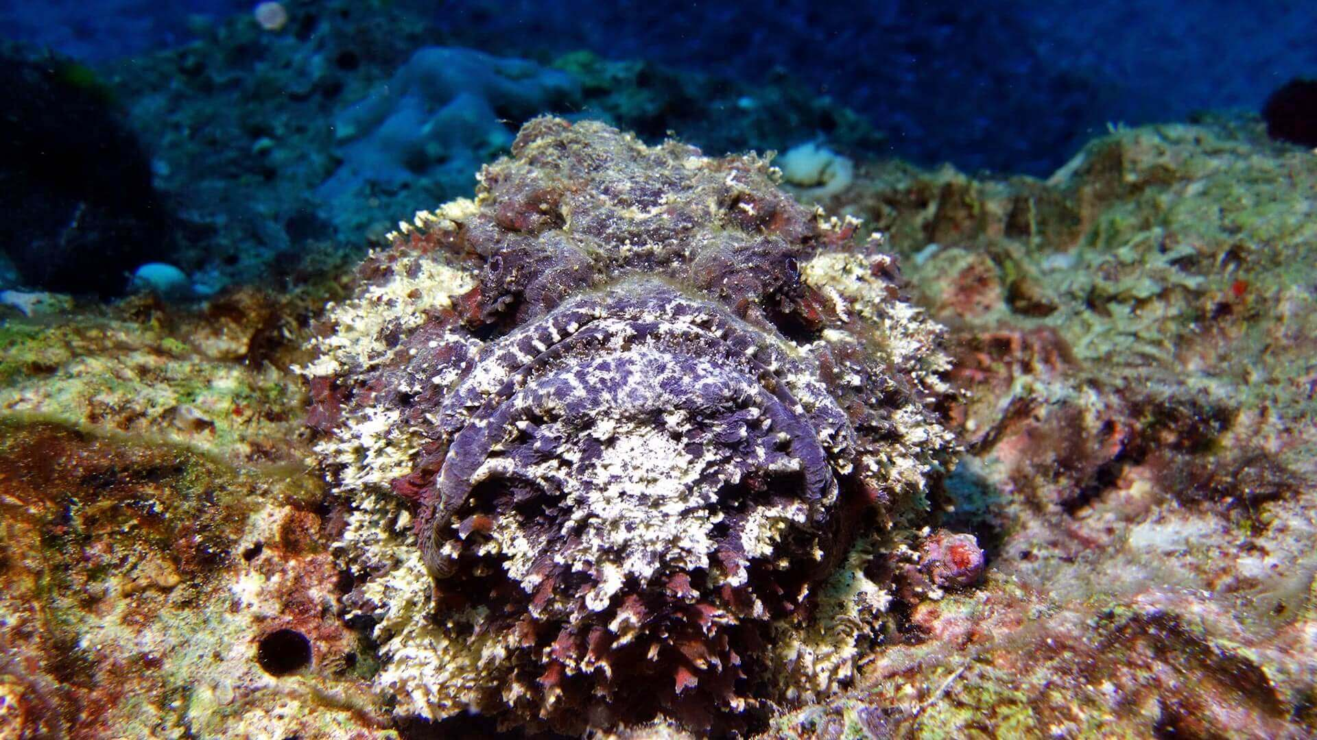 The Stonefish