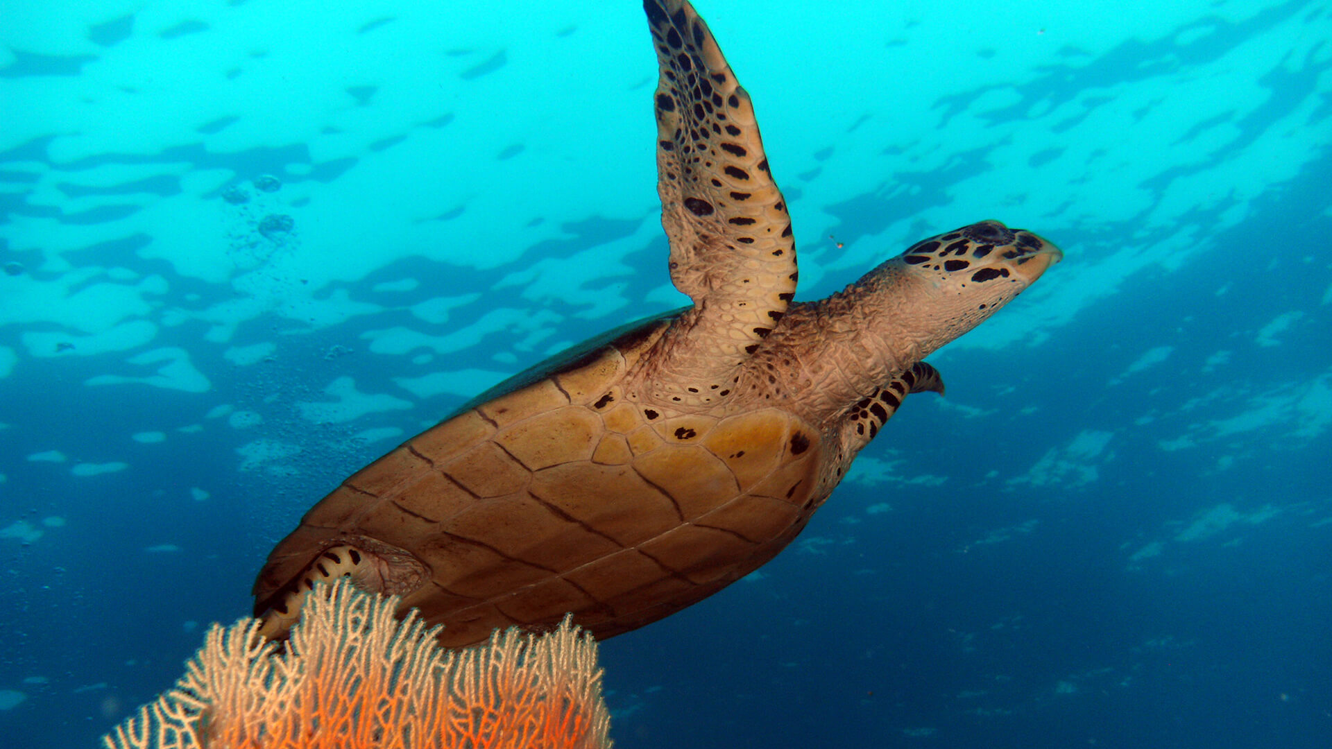 Turtle Rock – Phi Phi Diving With Turtles