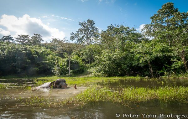elephant-relaxing-at-phuket-elephant-sanctuary