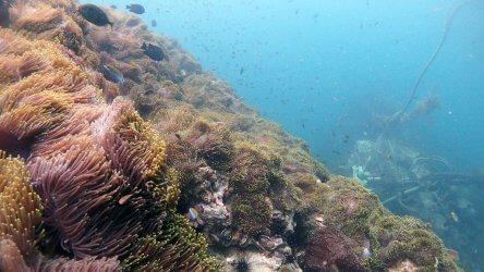 Phuket Scuba Diving Site Anemone Reef