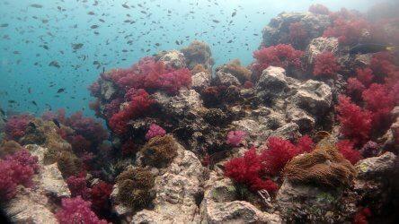 Phuket Scuba Diving Site Shark Point