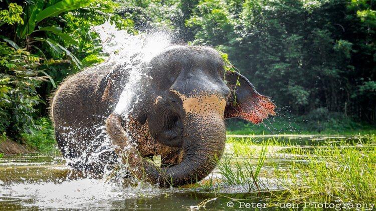 Things to do in Phuket - Phuket Elephant Sanctuary