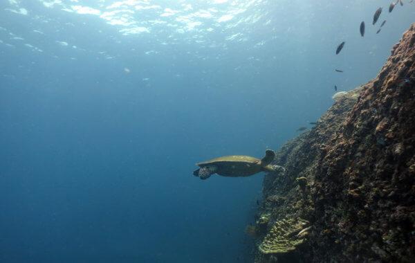 Phi Phi Island National Park