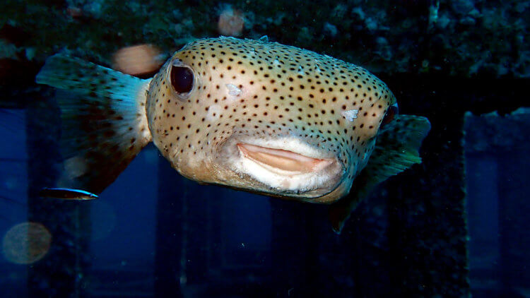 Don't Know What This Is? Then Take The Fish ID Adventure Dive