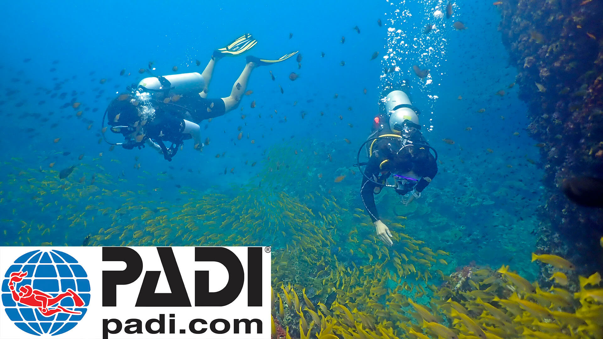 Are PADI And SSI Interchangeable?