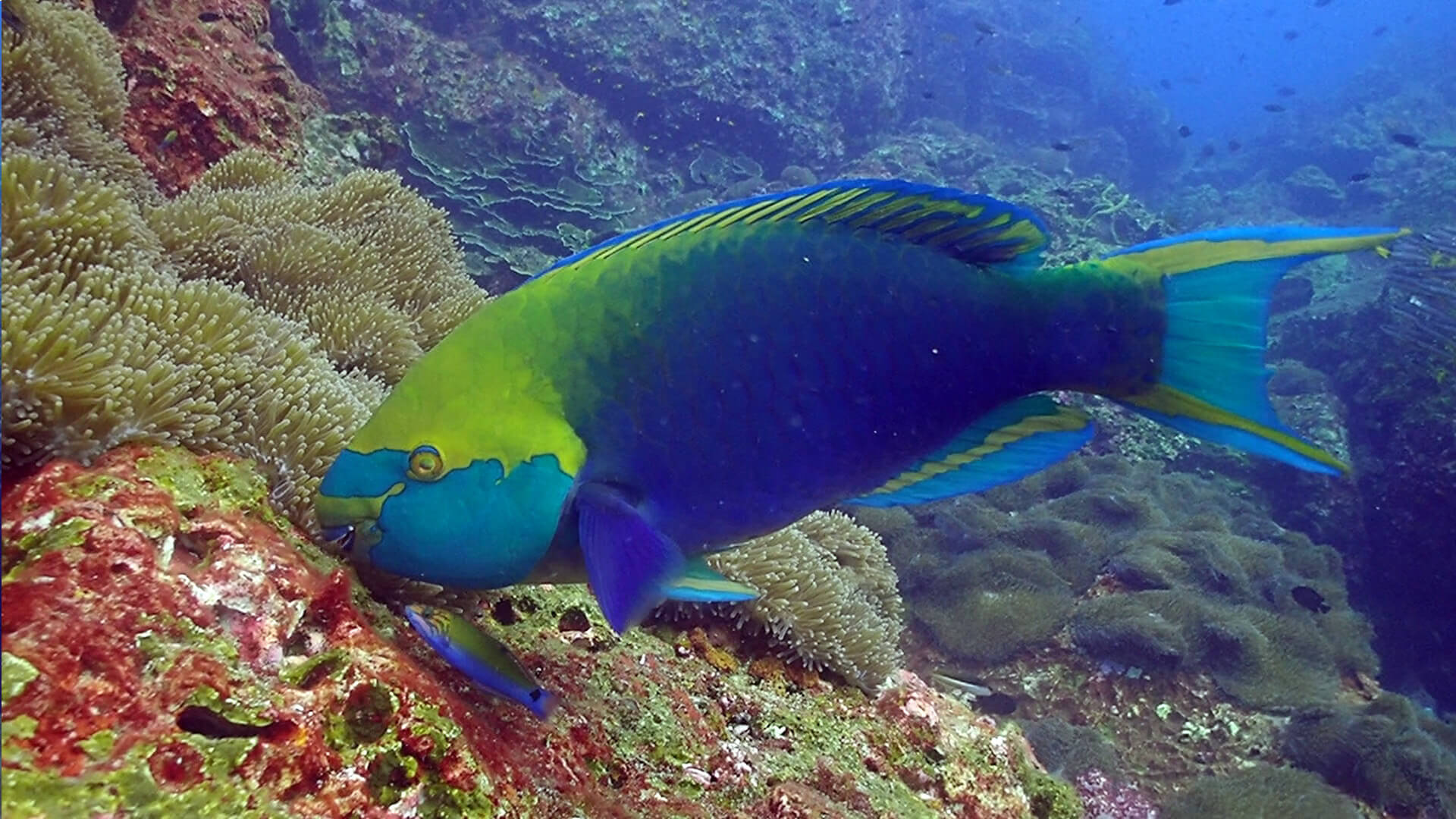 Parrotfish – Not Just A Pretty Face