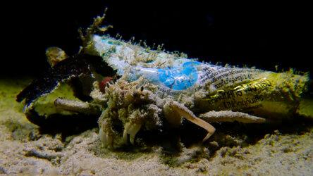 decorator crab with plastic