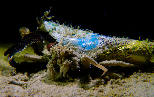 decorator crab with plastic
