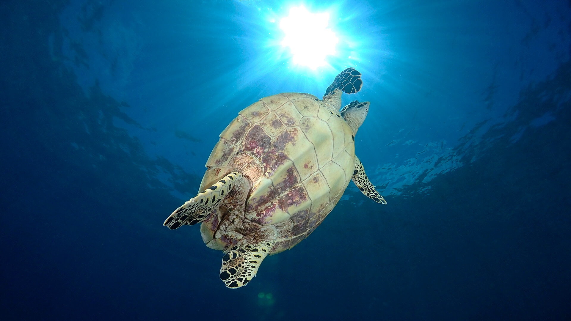 similan and surin new rules help reduce single use plastics and save turtles