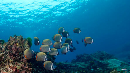 sample the best scuba diving in phuket with local dive thailand