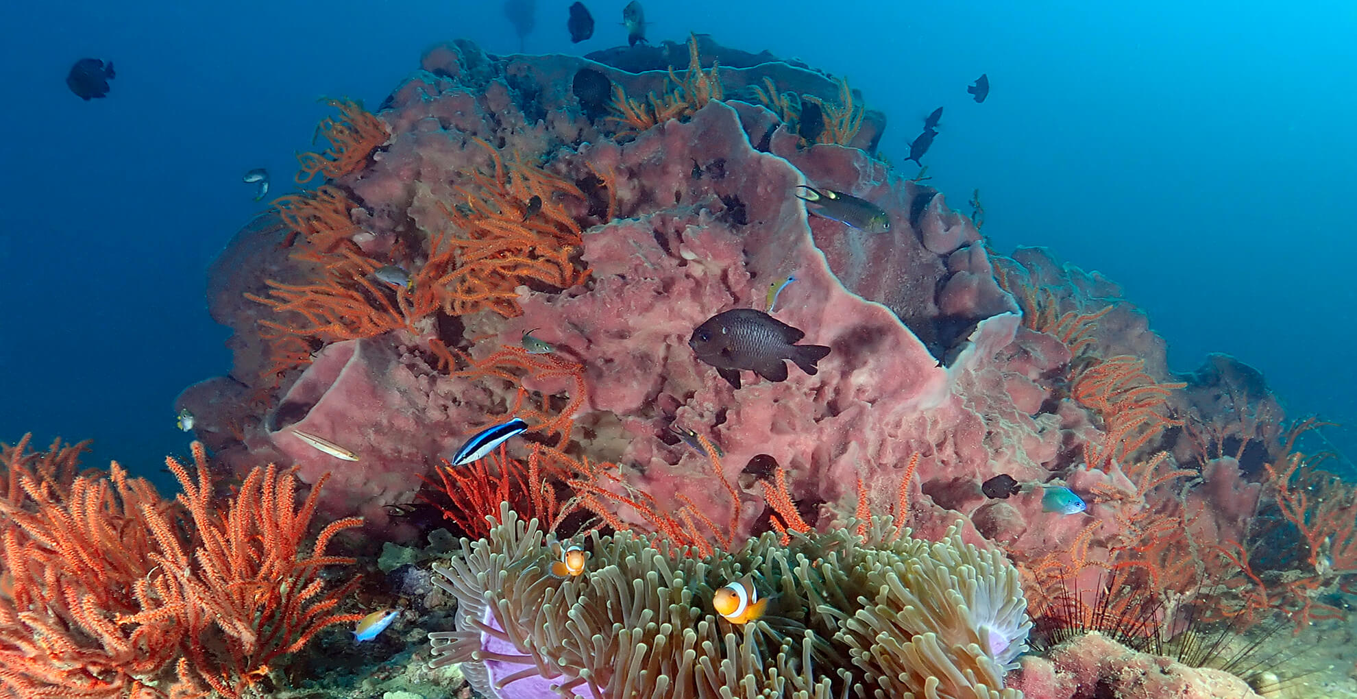 shark point is a highlight on the phuket diving agenda