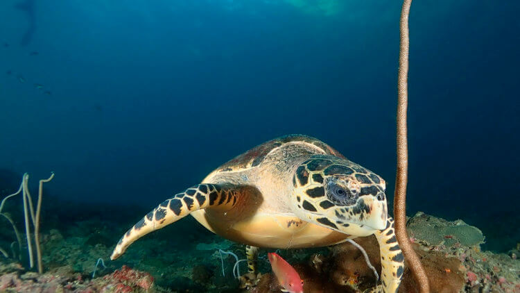 some of the best scuba diving in phuket is at turtle rock