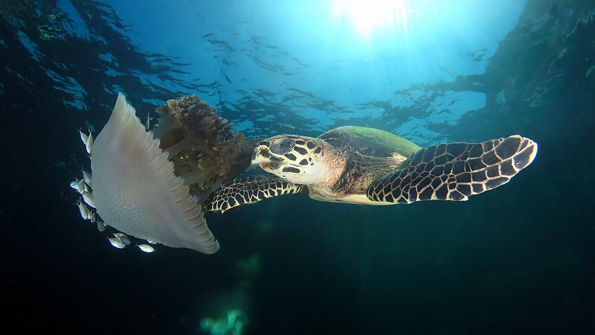 Manta Bay – A Beautiful Phuket Dive Site