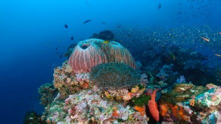 great diving on similan island liveaboards