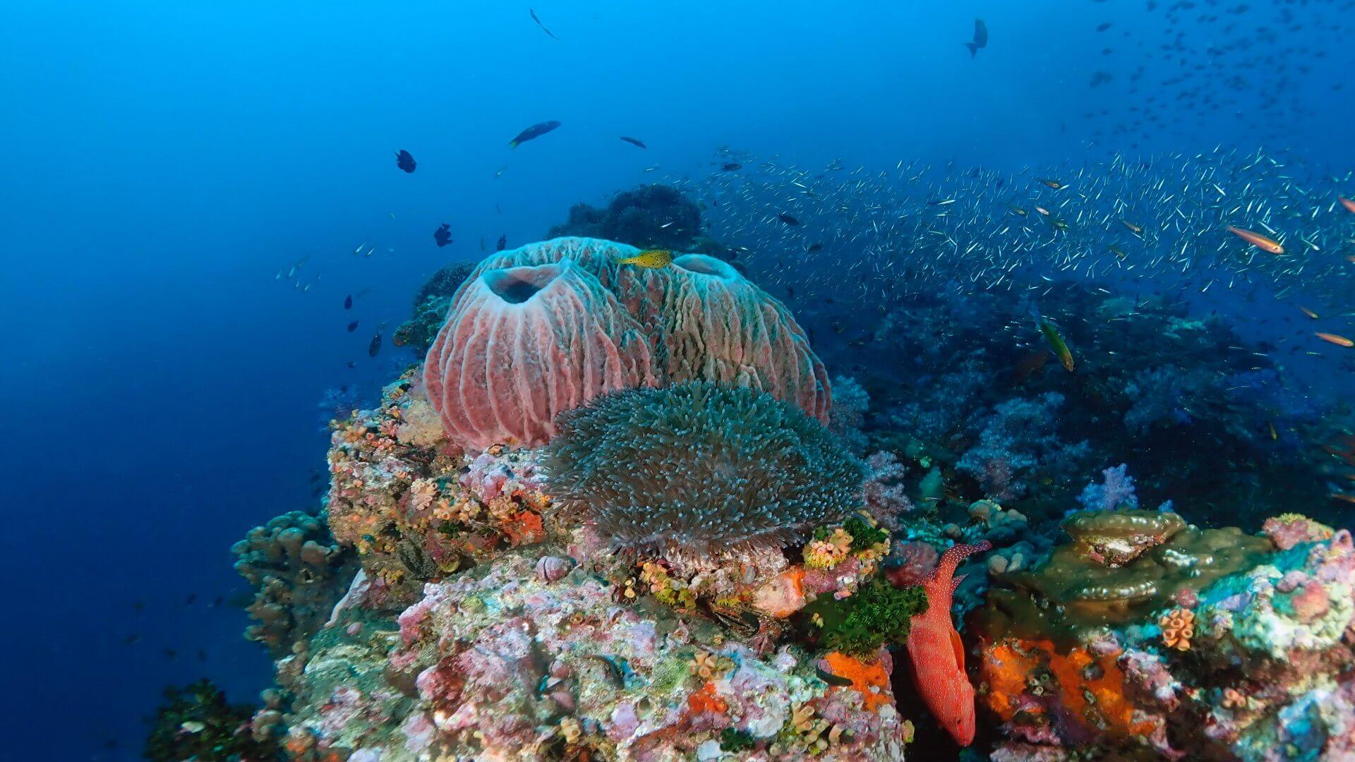 10% Early Booking Discount For Similan Island Liveaboard MV Pawara