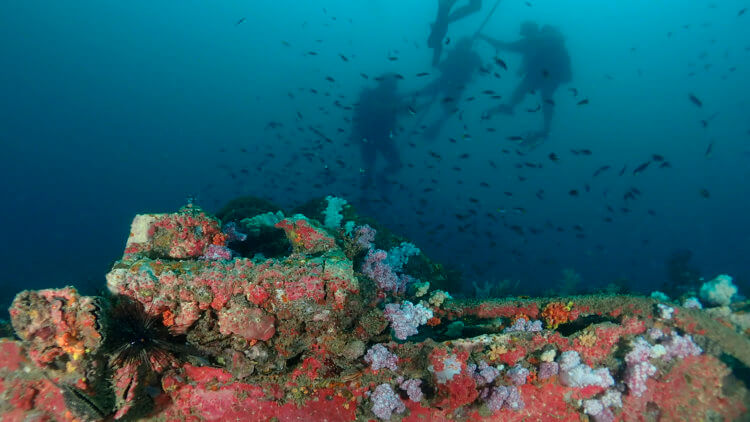 the best scuba diving wreck in phuket the king cruiser