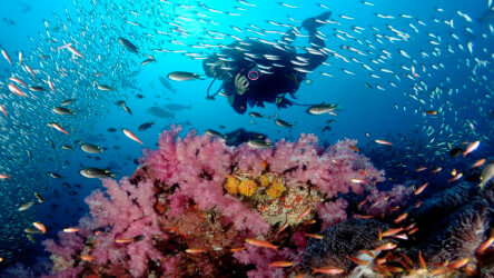 diving the stunning similan islands discount