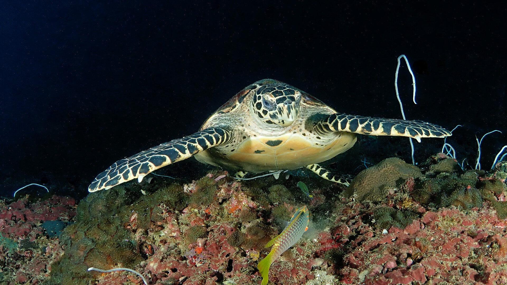 Sea Turtles In Phuket