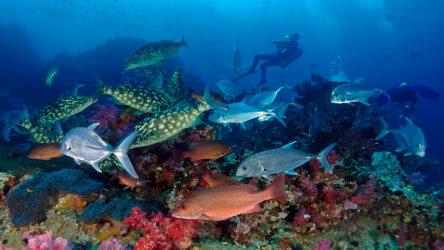fantastic end of season similan island diving sale