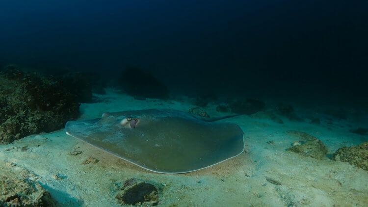 jenkins whipray on homerun reef