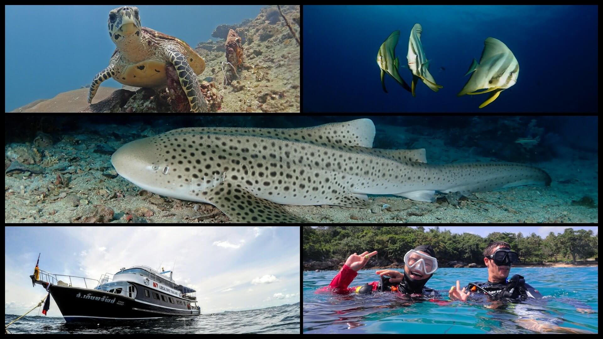 Phuket Diving Discount For Thai And Expat