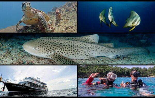 phuket diving discounts