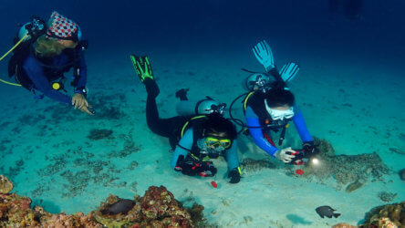 take the padi underwater digital photography course and impress your friends with clear, sharp photos
