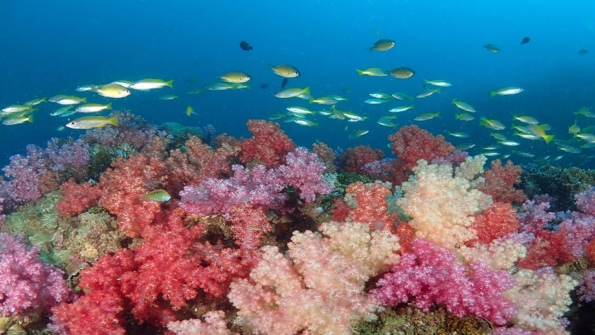 Amazing Local Dives