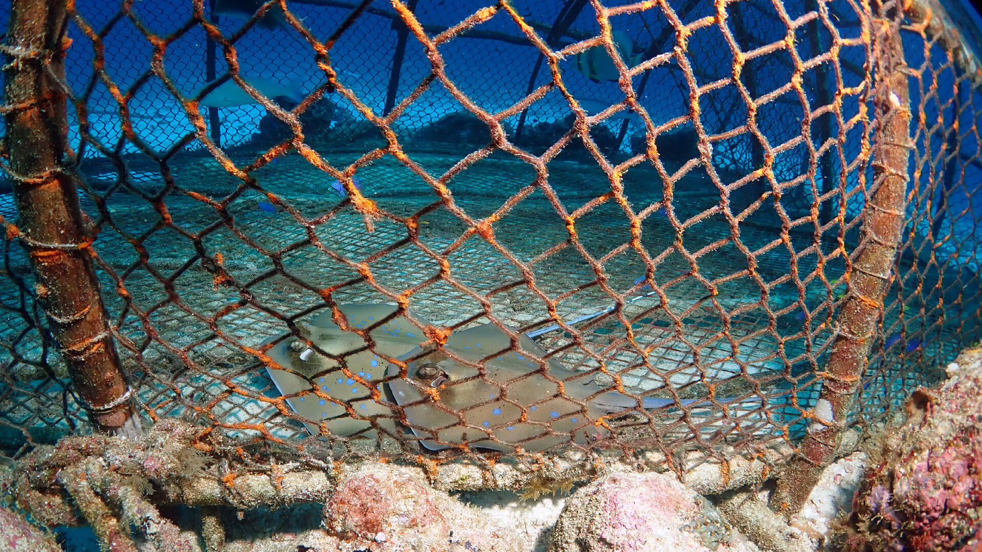 Protection For Phuket Reefs But Not All