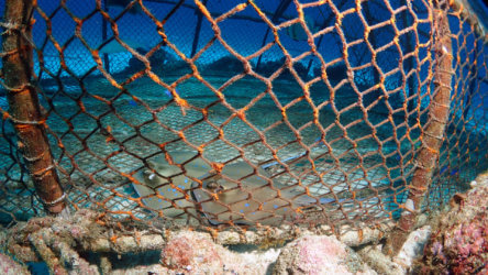 extra protection for some of phukets reefs