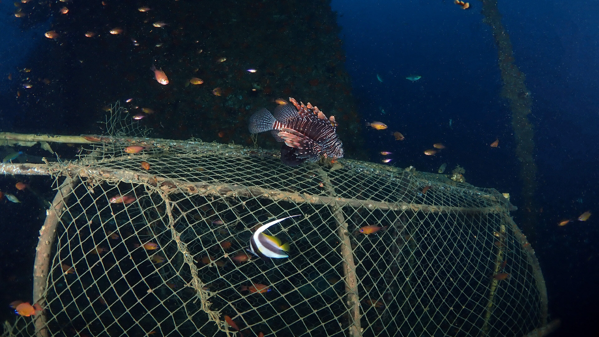 fish trap on the king cruiser wreck