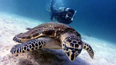 fun diving in phuket with local dive thailand